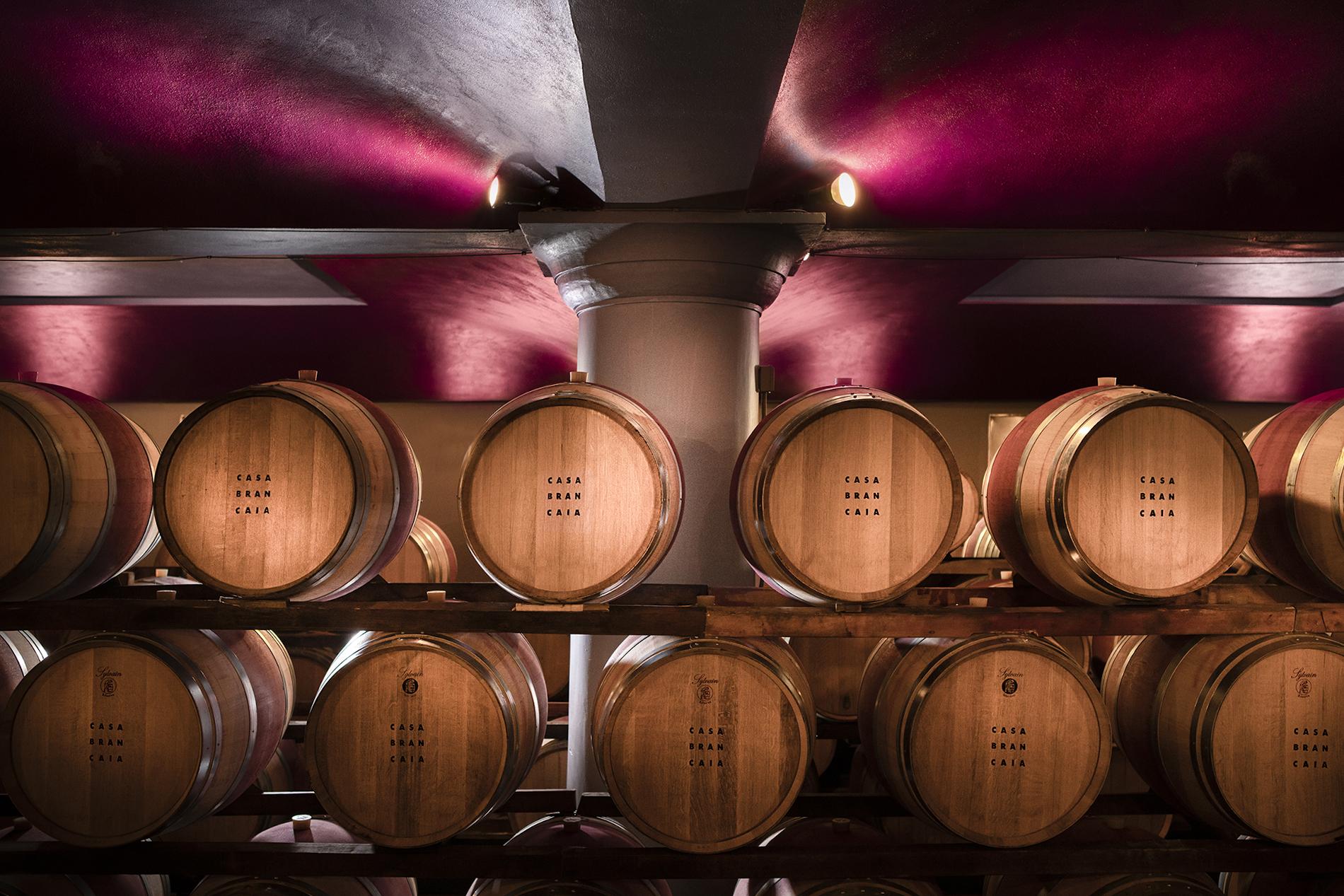 Brancaia Winery
